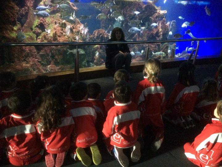 Visitem l'Aquarium!